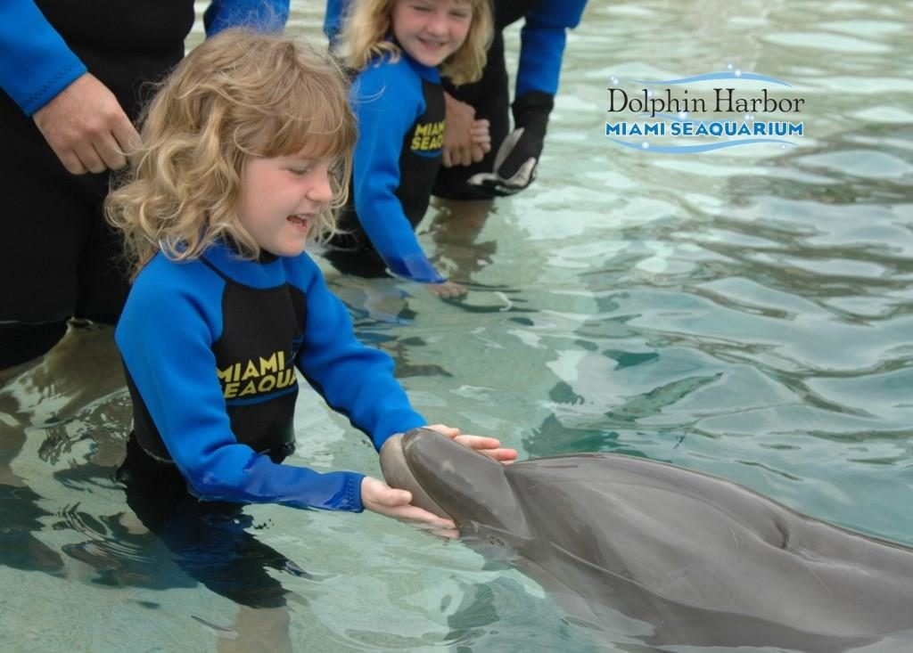 Dolphin Encounter at Miami Seaquarium