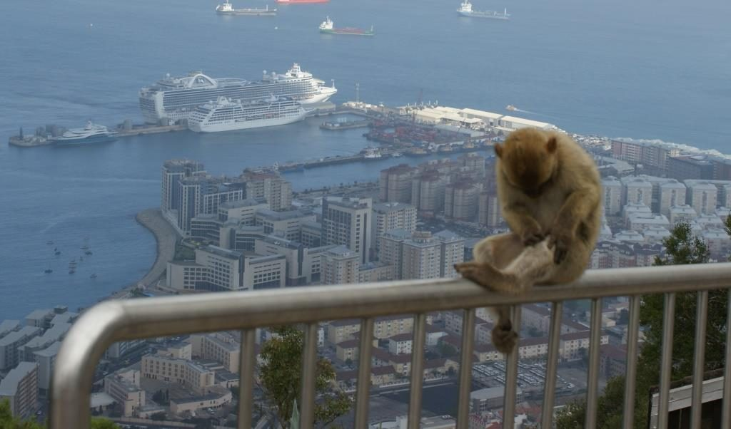 Barbary Apes, Gibraltar (2013)